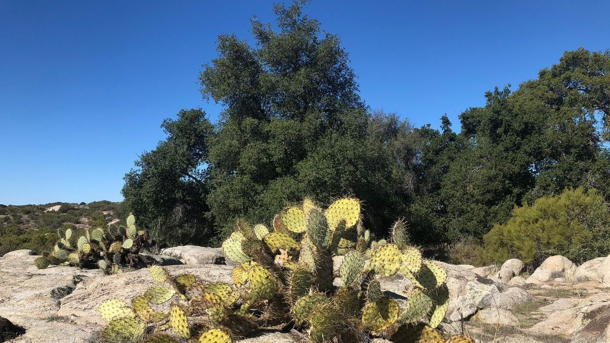 4 de 9: Terrenos en Venta en Tecate Baja California PMR-40