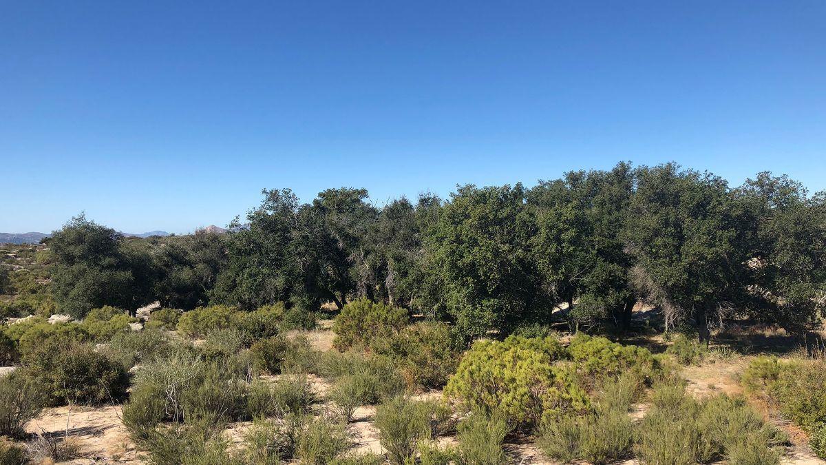 6 de 9: Terrenos en Venta en Tecate Baja California PMR-40