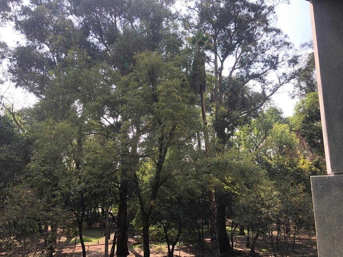 4 de 23: Vista al parque de Campos Eliseos