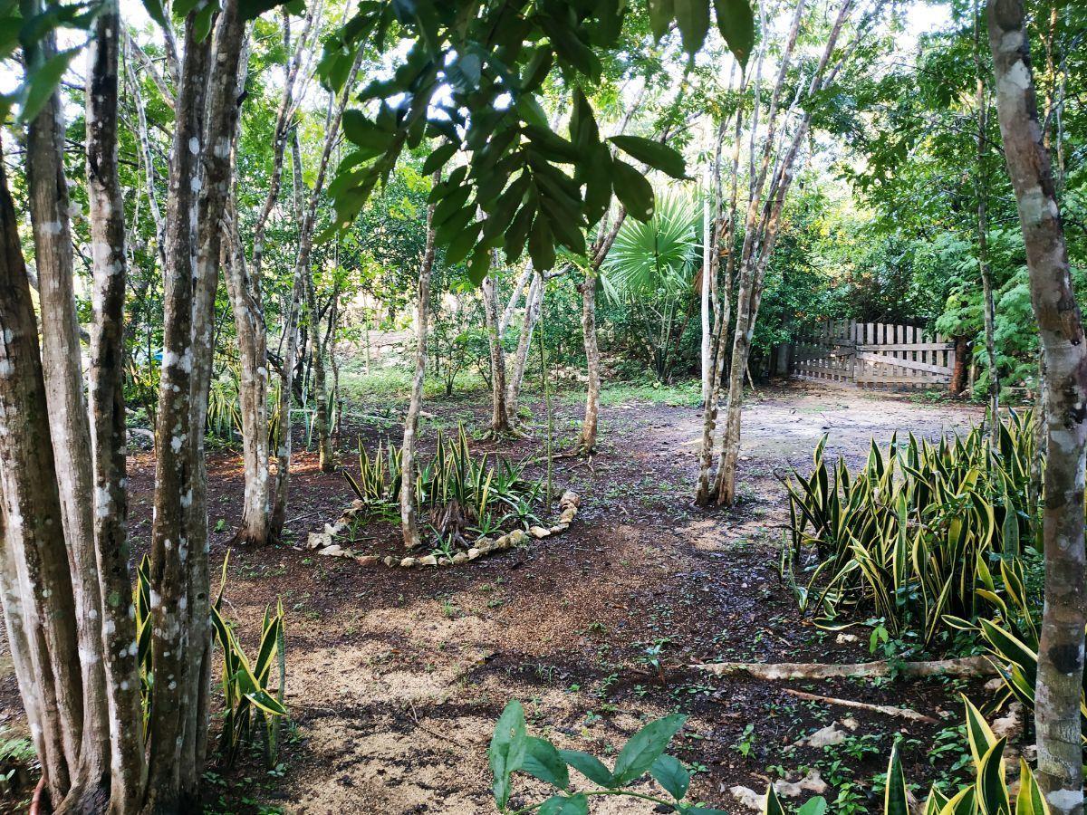3 de 34: Jardín