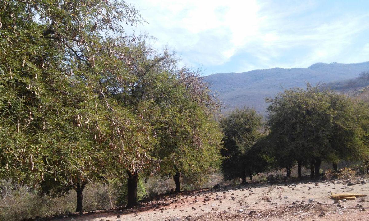 5 de 15: huerta de tamarindos