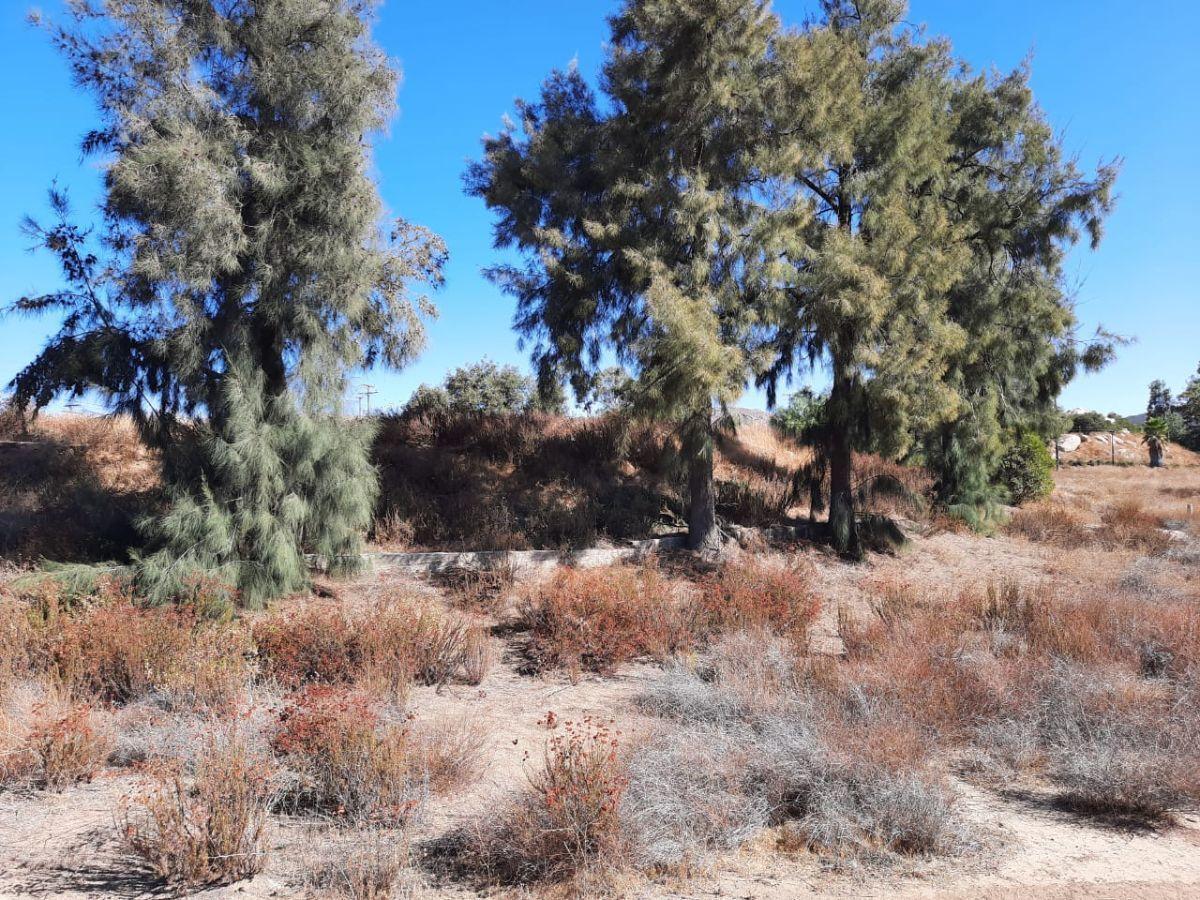 7 de 17: Terreno con árboles