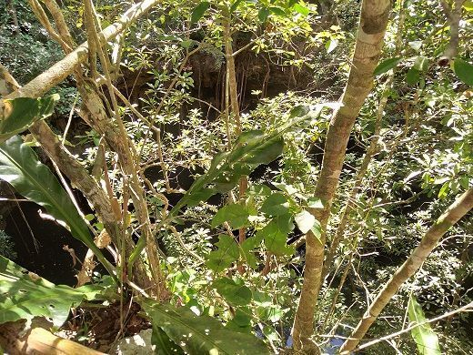 3 de 11: otra vista del Cenote