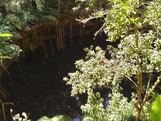 2 de 11: alrededor del Cenote hay abundante vegetación