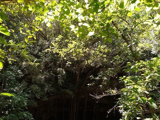 5 de 11: Vista del cenote desde arriba