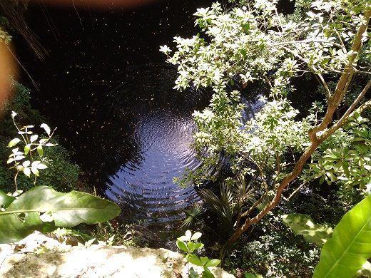 6 de 11: el agua del cenote es azul oscuro de gran profundidad