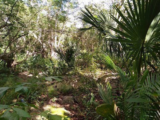 8 de 11: en el lugar hay mucha vegetación de diferentes especies