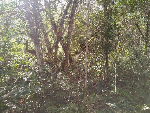9 de 11: Hay monte alto alrededor del Cenote