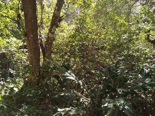 10 de 11: Vegetación abundante y de gran altura