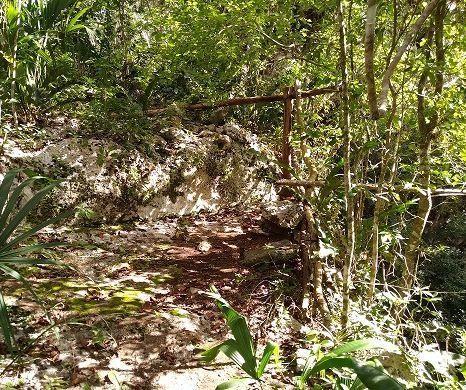 11 de 11: Alrededor del cenote hay laja solida