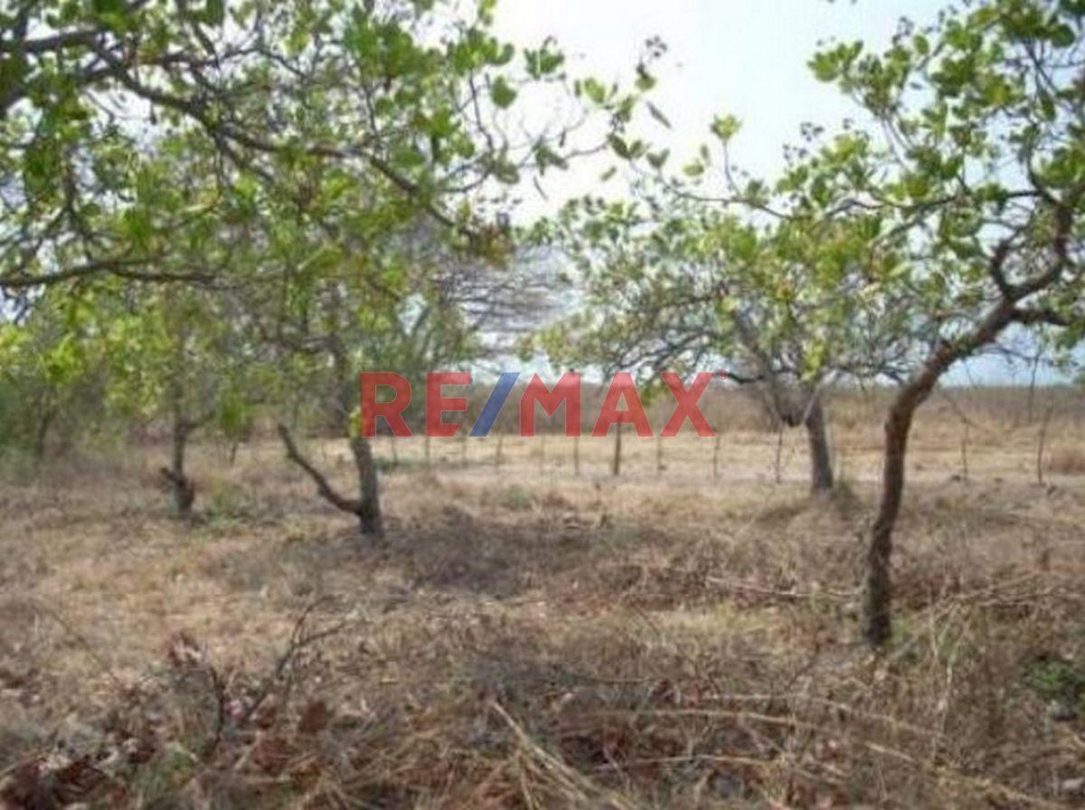 Remax real estate, Guatemala, Taxisco, Terreno en Venta Km. 117 Carretera La Avellana, Taxisco