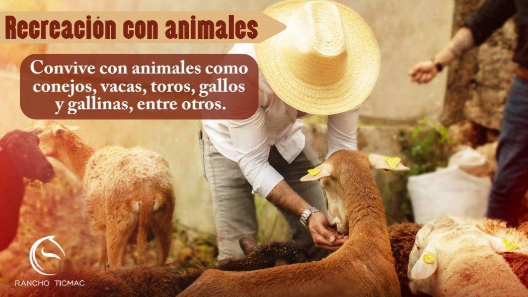 9 de 15: Convivencia con los animales del Rancho