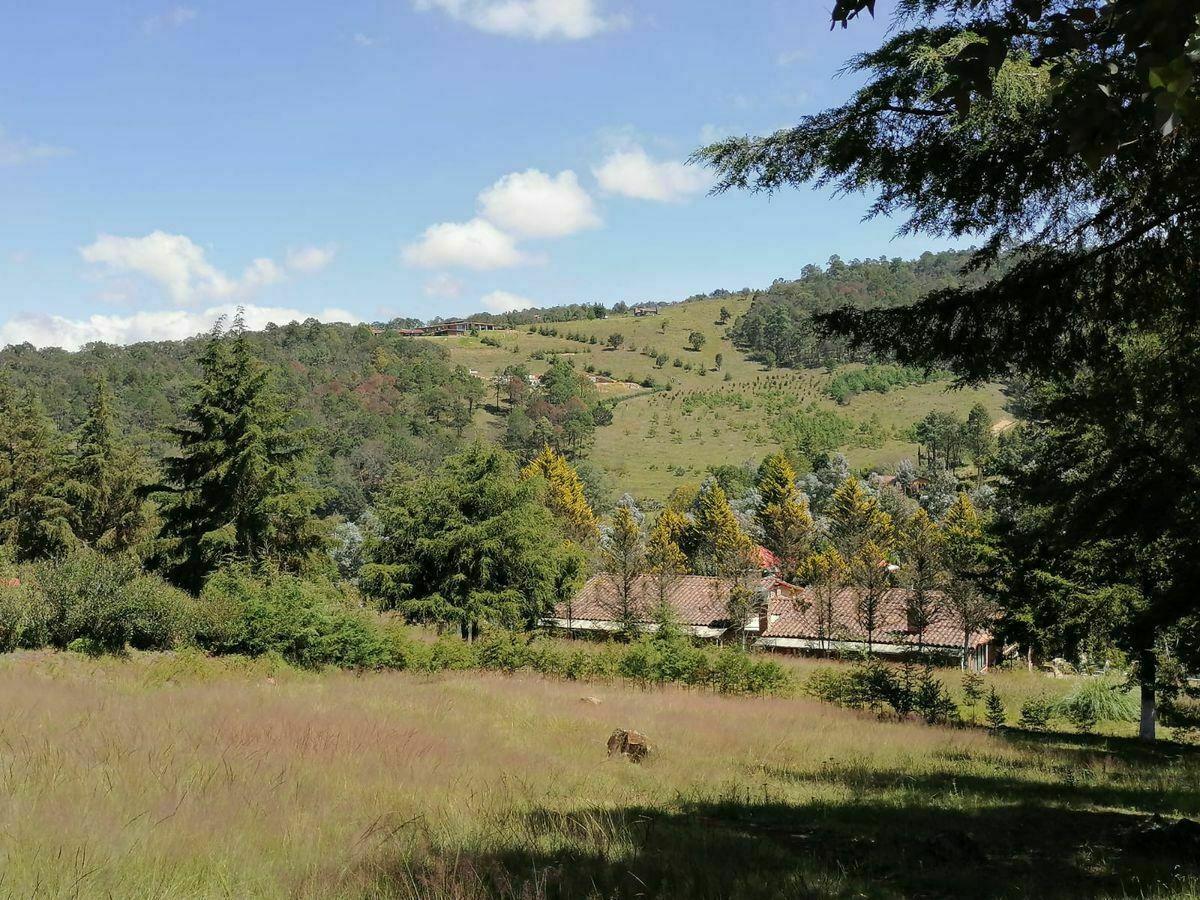 Bienvenido A Grupo Inmobiliario El Bosque