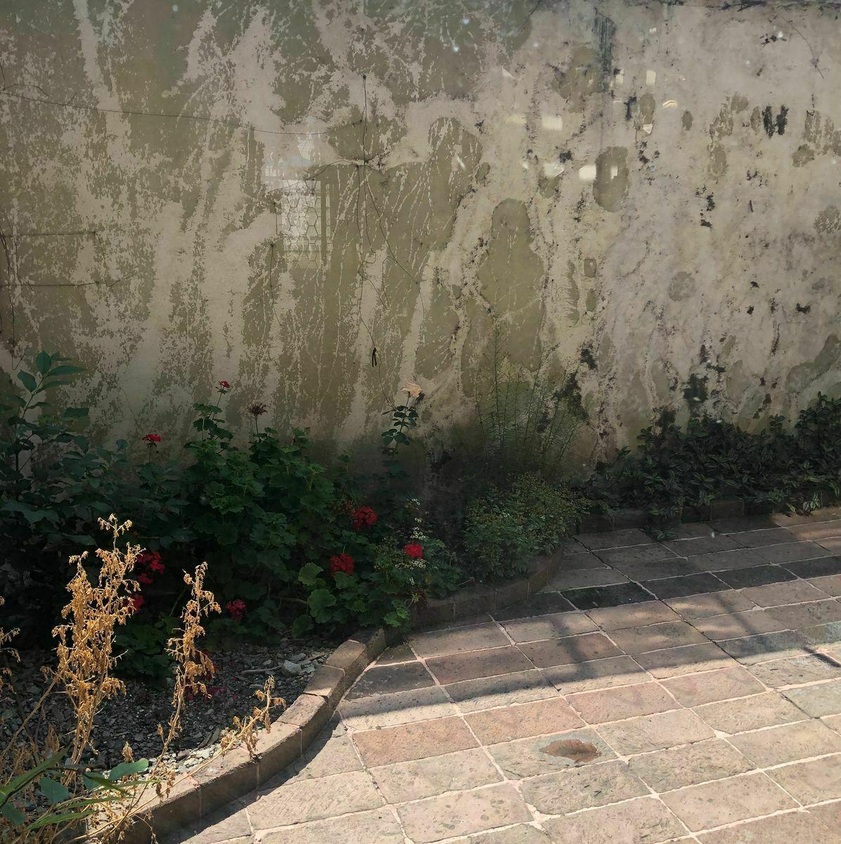 10 de 24: Jardin