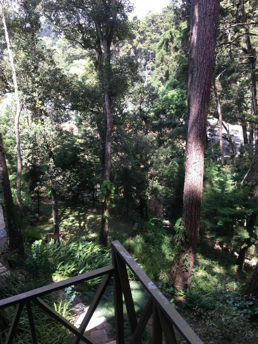 12 de 16: Vista del bosque