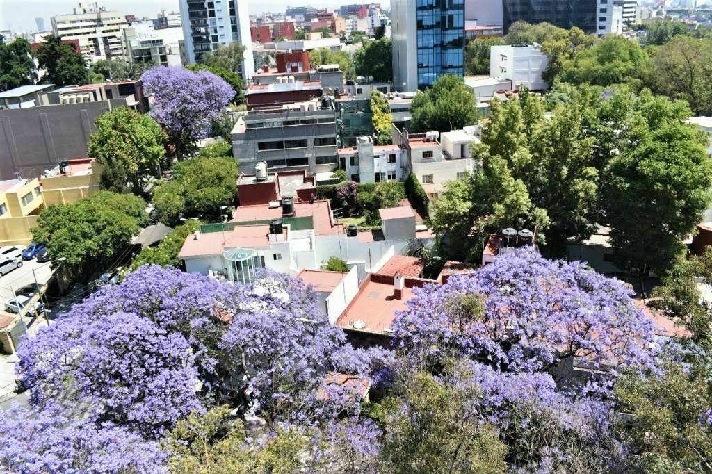 6 de 16: Increíble vista desde  Roof Garden