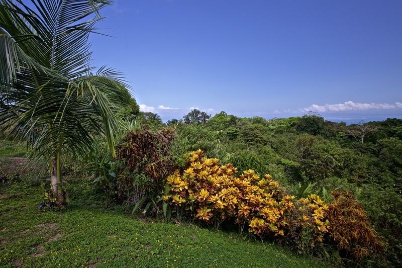 5 of 10: Tropical Ornamentals