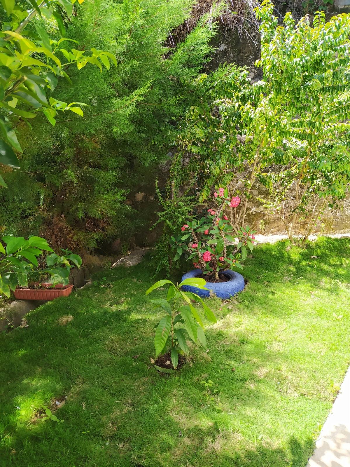 19 de 20: Jardín lateral