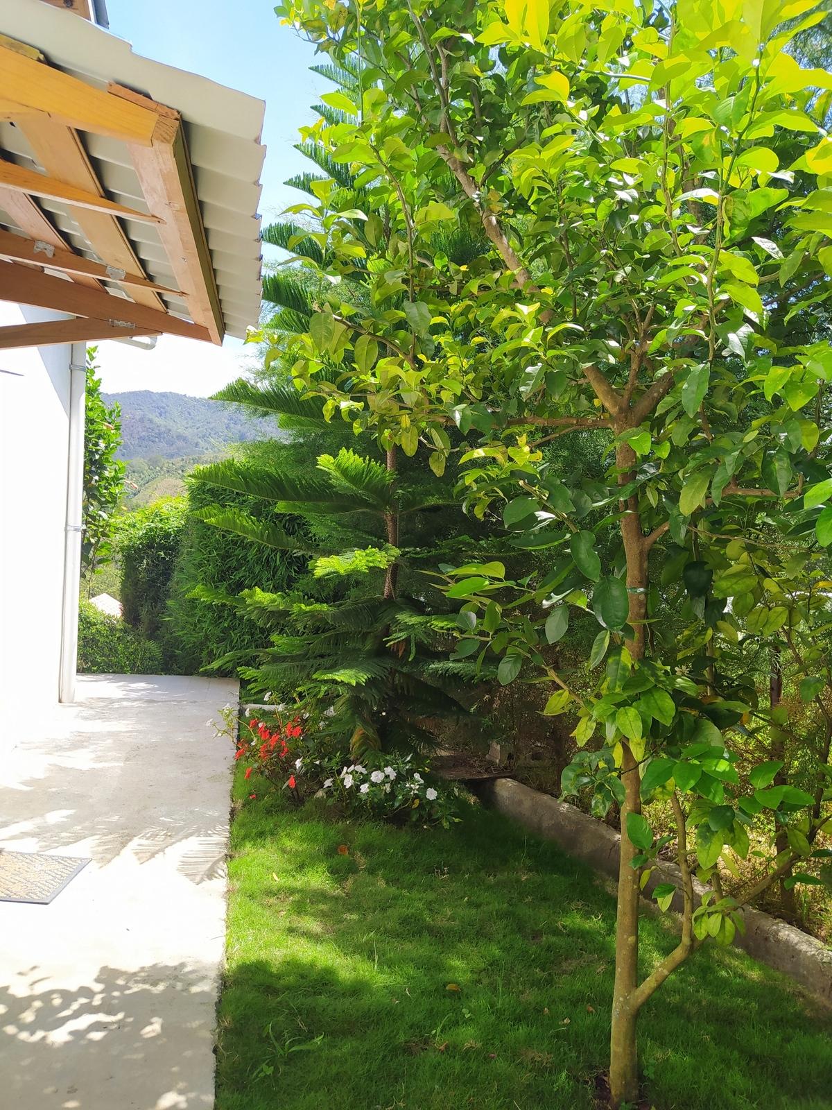 20 de 20: Jardin rodeado de pinos