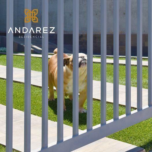 4 de 24: contaremos con un PET PARK para tu mascota