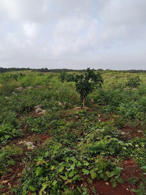 9 de 20: En algunas areas se observa maleza por efecto de la lluvia