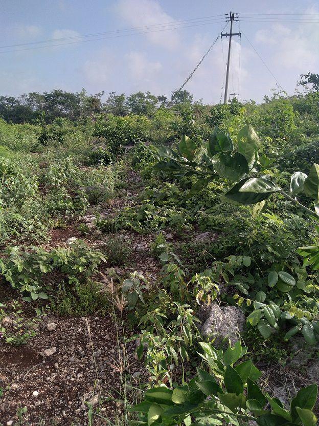 10 de 20: Otra vista de las plantas