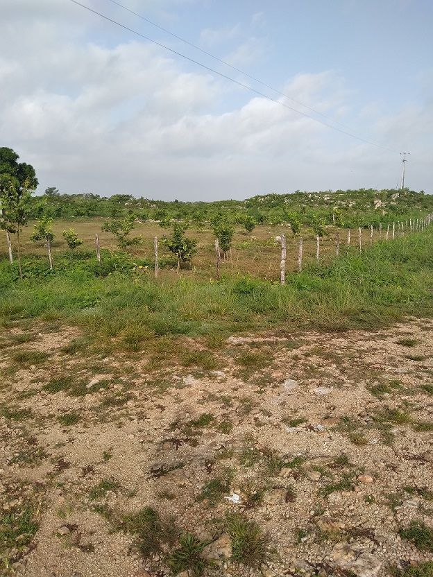 19 de 20: vista de otro Angulo de la plantación