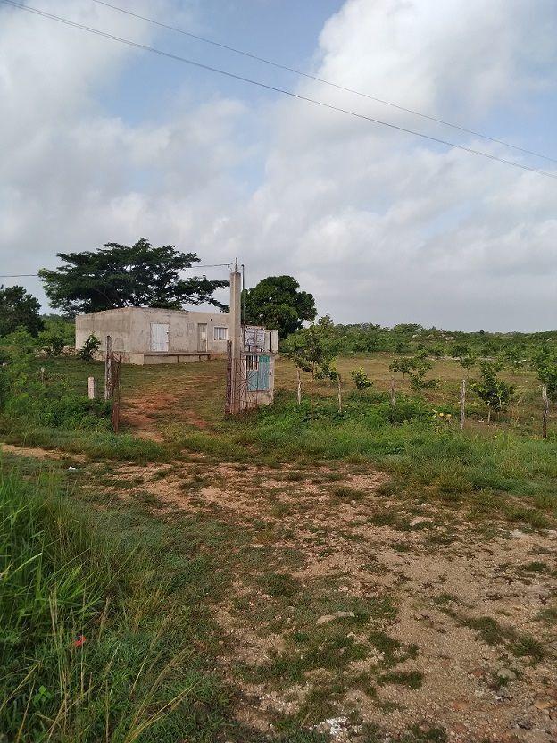 1 de 20: Vista de la plantación de una esquina de la propiedad.