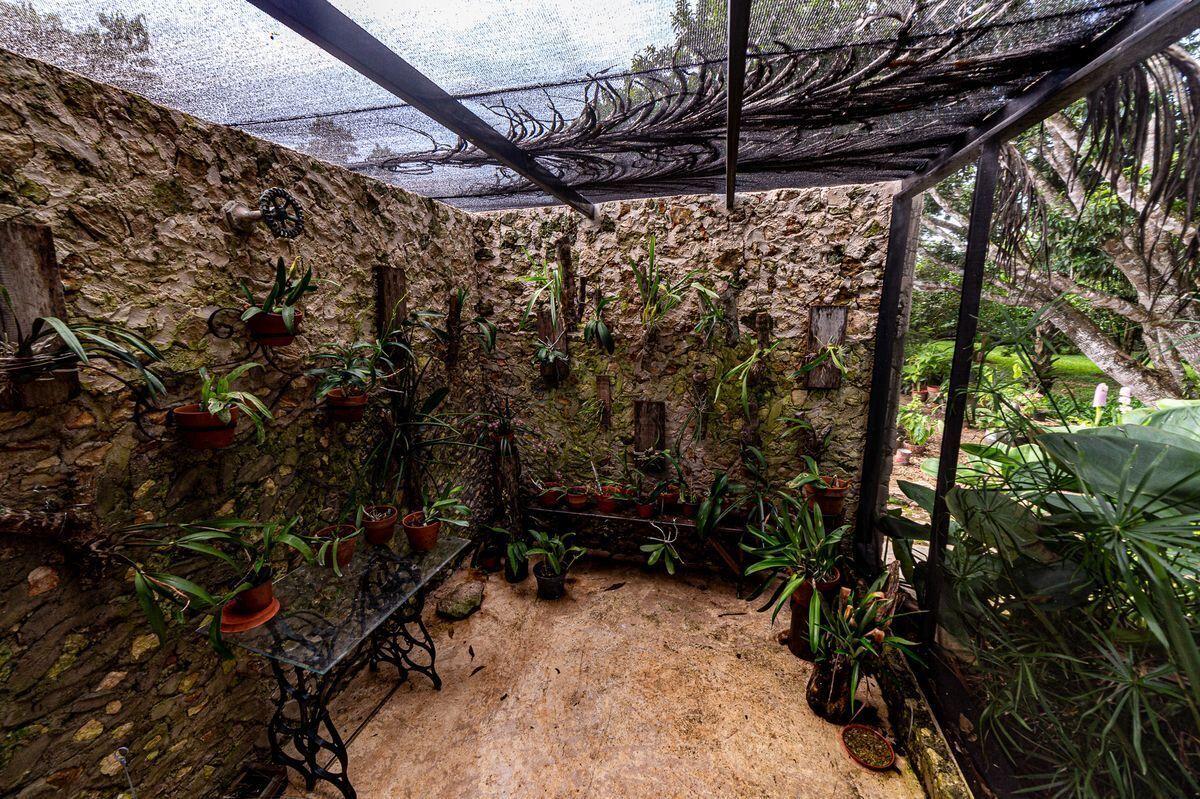 22 de 47: Invernadero de orquídeas