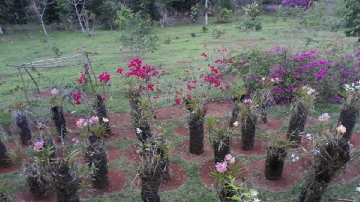 3 de 23: Jardín de Orquídeas