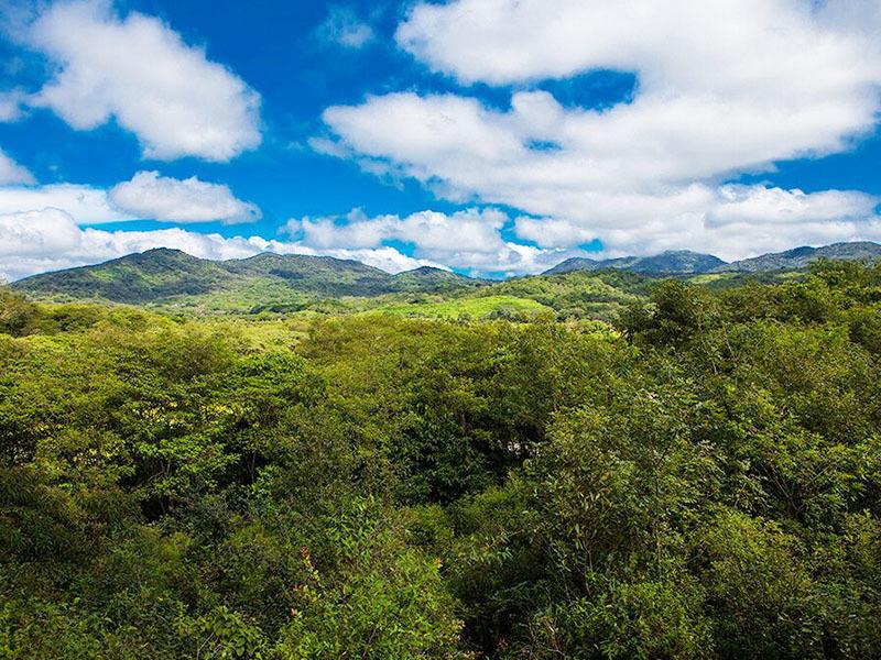 8 of 18: vista a la selva