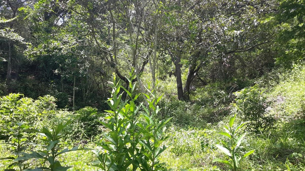 8 of 14: áreas verdes