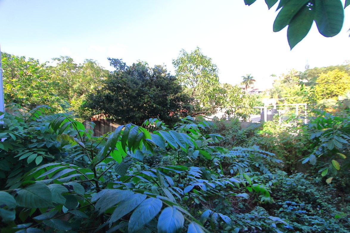15 de 20: Amplio patio (no se aprecia por las plantas)