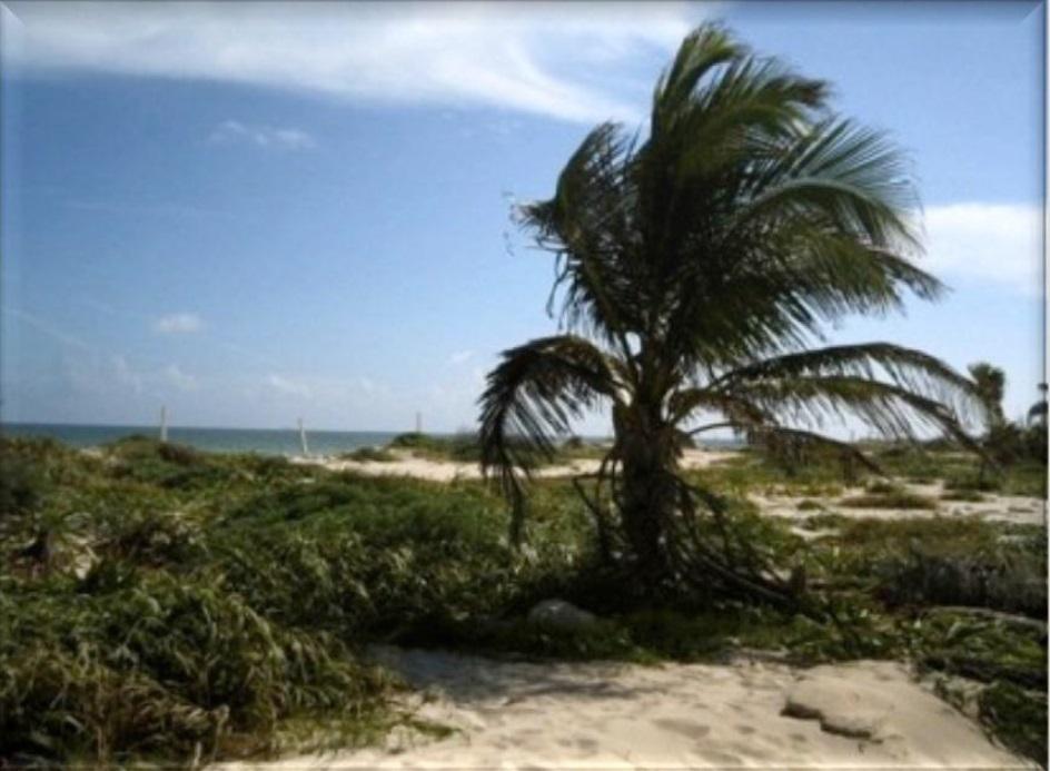 5 de 15: Lote con playa para uso hotelero