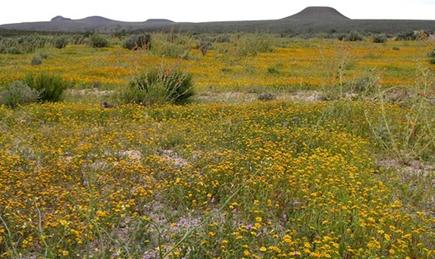 5 de 7: Predio en Baja California