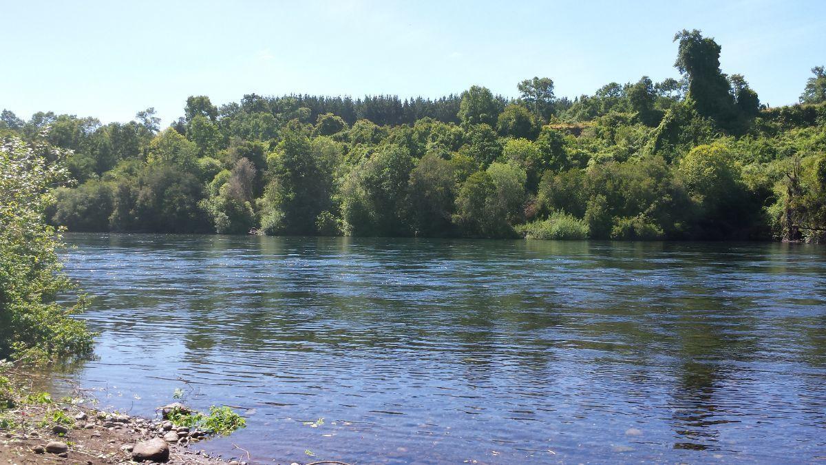 8 de 14: Bajada al Rio Bueno.