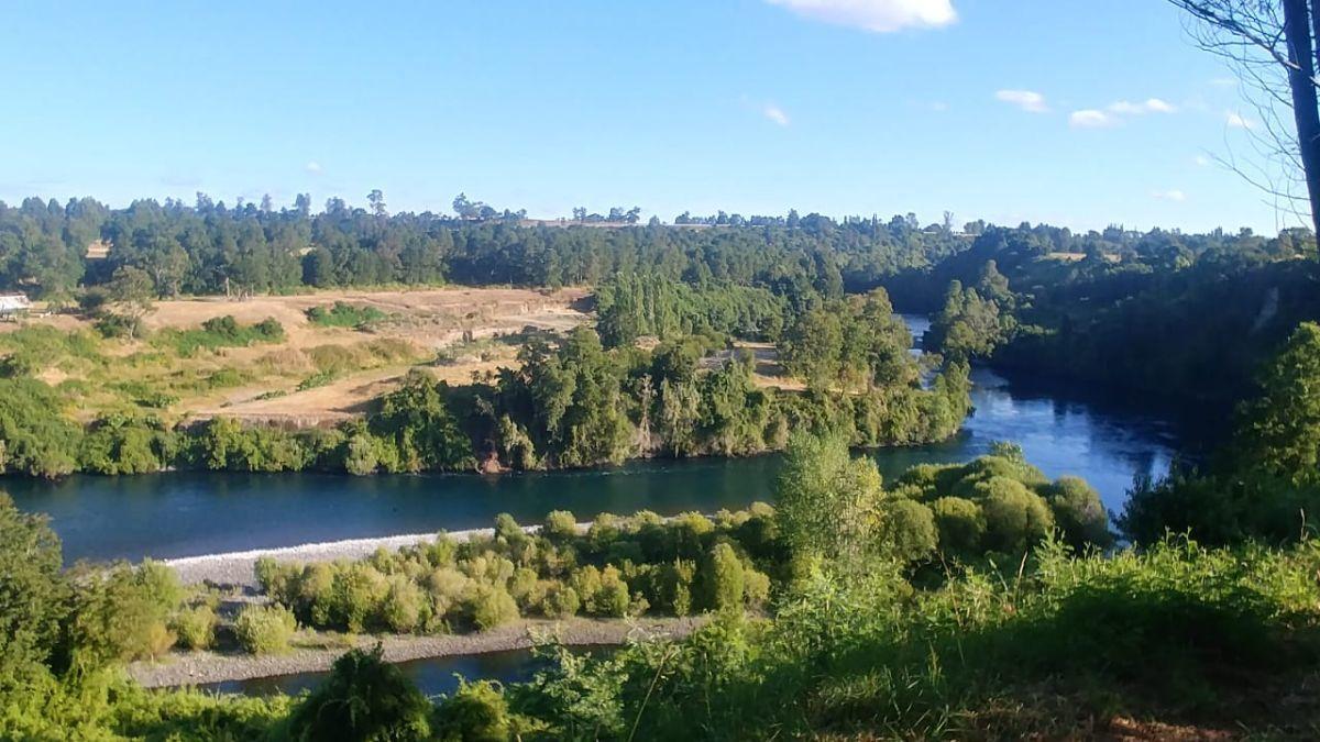 12 de 14: Vista desde el bosque al Rio Bueno.