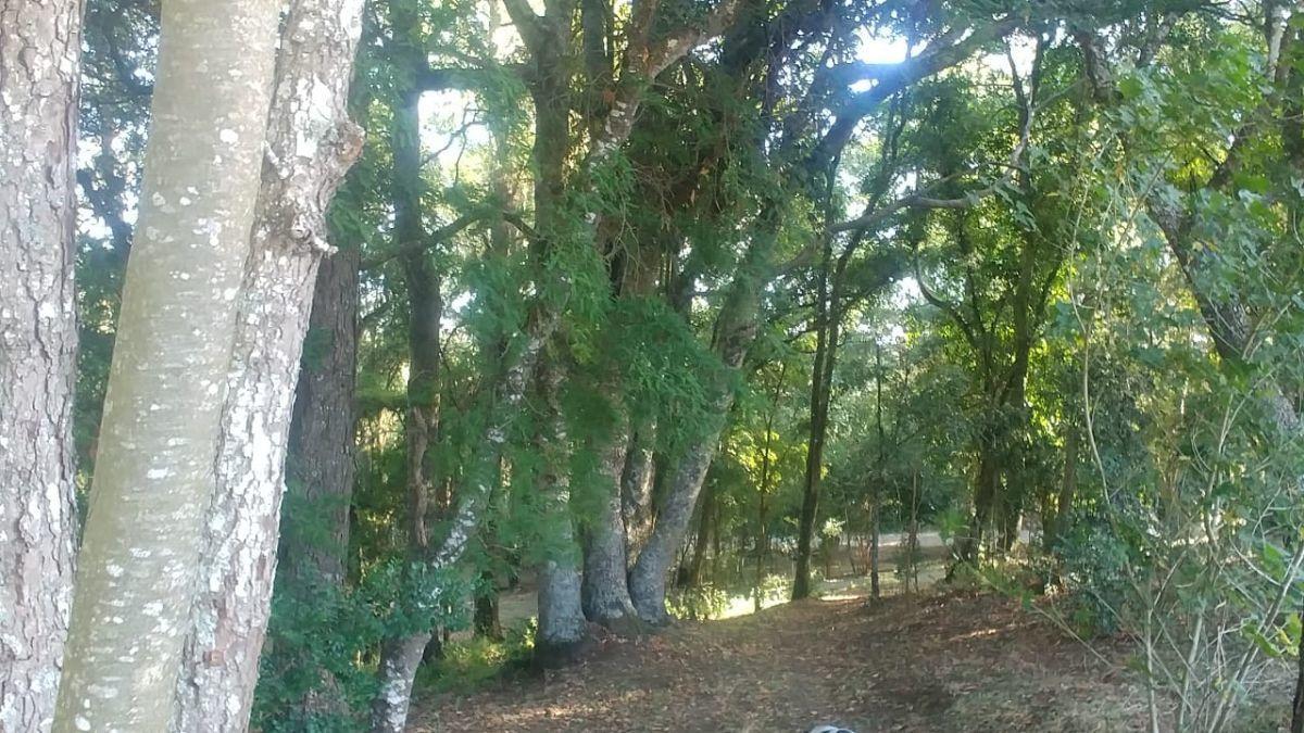 13 de 14: Bosque en bajada al río.